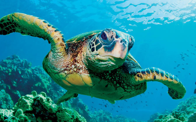 Points To Do Promptly Concerning Sea Turtles