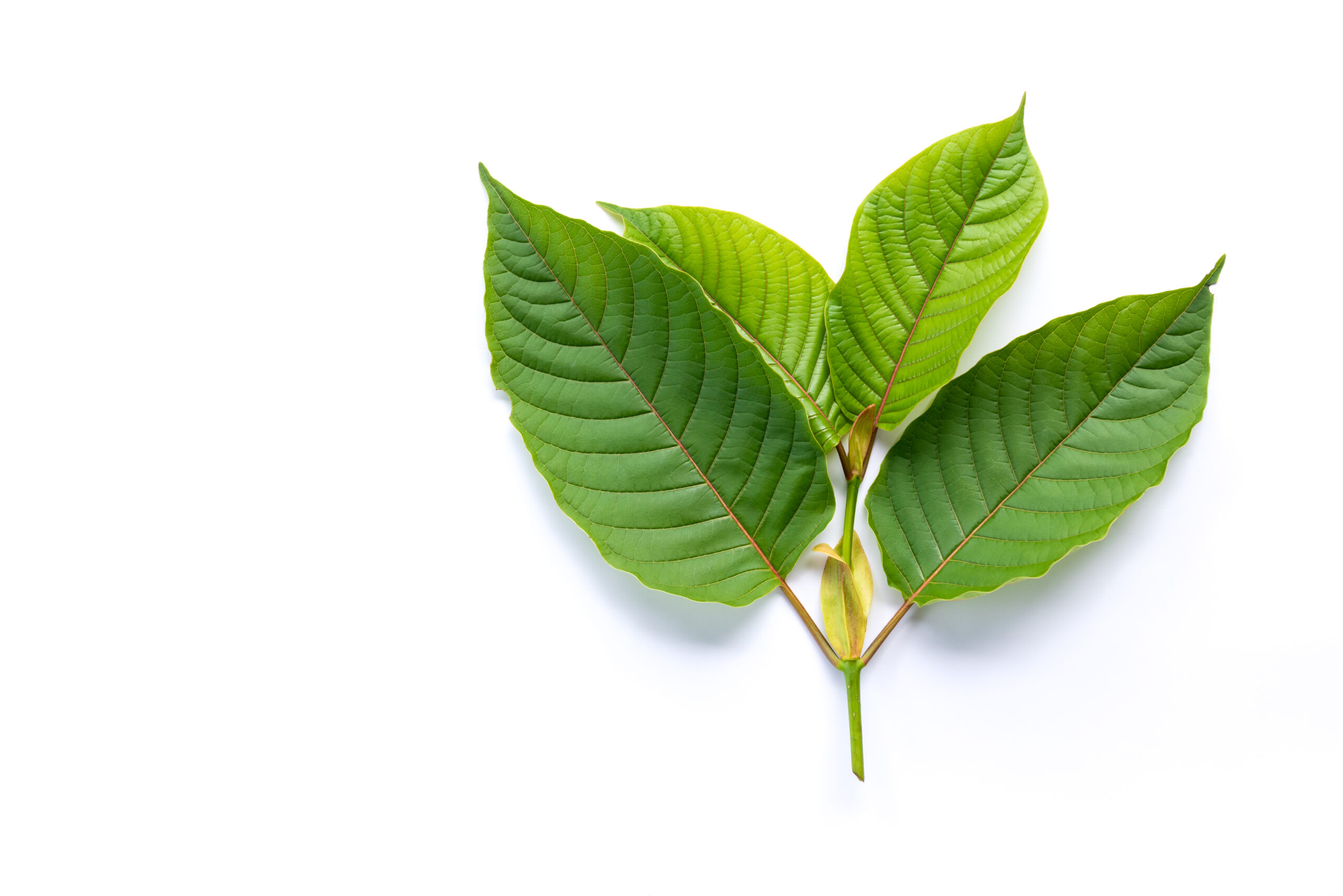 The Way A Lot Can You Price For Greatest Kratom Vendors